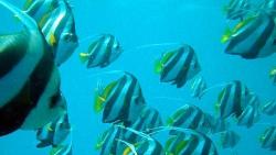 Khaad Diving Center