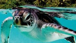 Discover Baa Atoll