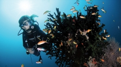 Diving at Soneva Fushi