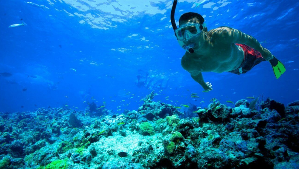 One House Reef Night Snorkeling