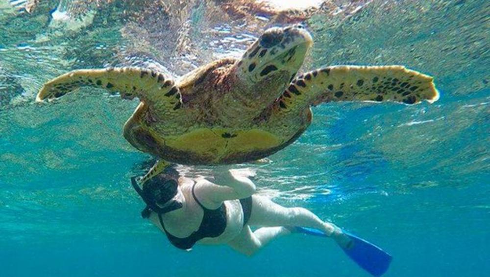 Happy Together - Turtle Safari